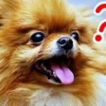 【質問回答】ネットビジネス初心者はまず何から始めればいい?